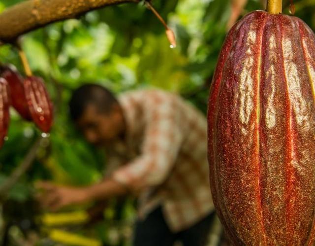 Choco-LATE…ช็อคโกแลตกับความยั่งยืน/ธัญญรัศม์ ริลินเกอร์ Arabesque S-Ray