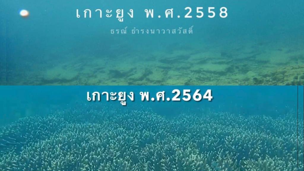 ดร.ธรณ์ เผยภาพปะการัง 'เกาะยูง' ต่างจากเดิมมาก ชี้เป็นความสำเร็จอย่างสูงของอนุรักษ์ปะการัง