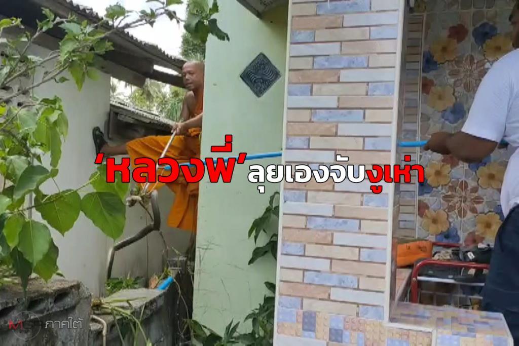 """คุณพระช่วย! หลวงพี่ลุยเองช่วยจับ """"งูเห่า"""" ตัวยาว 1.5 เมตร บุกเลื้อยเข้าบ้านชาวเมืองคอน"""
