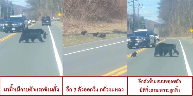 """""""มามี้หมี"""" กับเจ้าสี่แสบ อลวนข้ามถนน ต้นฤดูสปริง ตำรวจวินเชสเตอร์ขอบคุณผู้ขับขี่ที่ห่วงใยสัตว์ป่า (ชมคลิป)"""