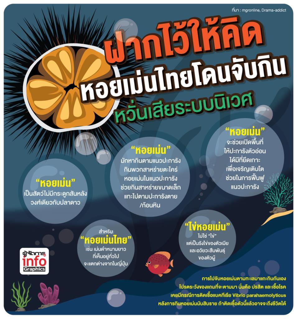 ฝากไว้ให้คิด หอยเม่นไทยโดนจับกิน หวั่นเสียระบบนิเวศ