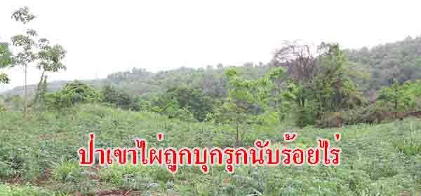 ผงะ!นายทุน-ชาวบ้านรุกแผ้วถางป่าสงวนเขาไผ่ จ.ชลบุรี เสียหายหลายร้อยไร่