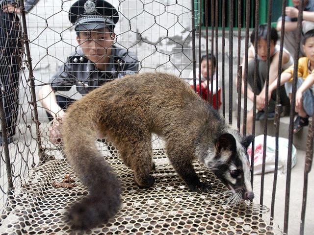 """เอ็นจีโอบี้รัฐบาลอังกฤษ แบน """"ขนสัตว์""""จากจีน ยันหลักฐานทารุณสัตว์-มาตรฐานฟาร์มต่ำเสี่ยงต่อโควิดระบาดซ้ำ"""