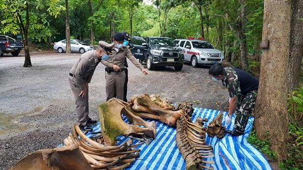 ตรวจสอบซากช้างป่าตายใน อุทยานฯ แก่งกระจาน หาหัวกระสุนปืน