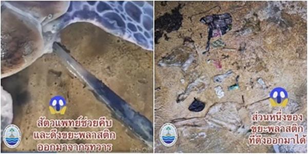 """เต่ากว่าร้อยละ 50 กินขยะพลาสติกในทะเล! ทช. โชว์คลิปช่วยเต่าตนุที่โชคดี """"ดึงเศษพลาสติกออกจากก้น"""""""
