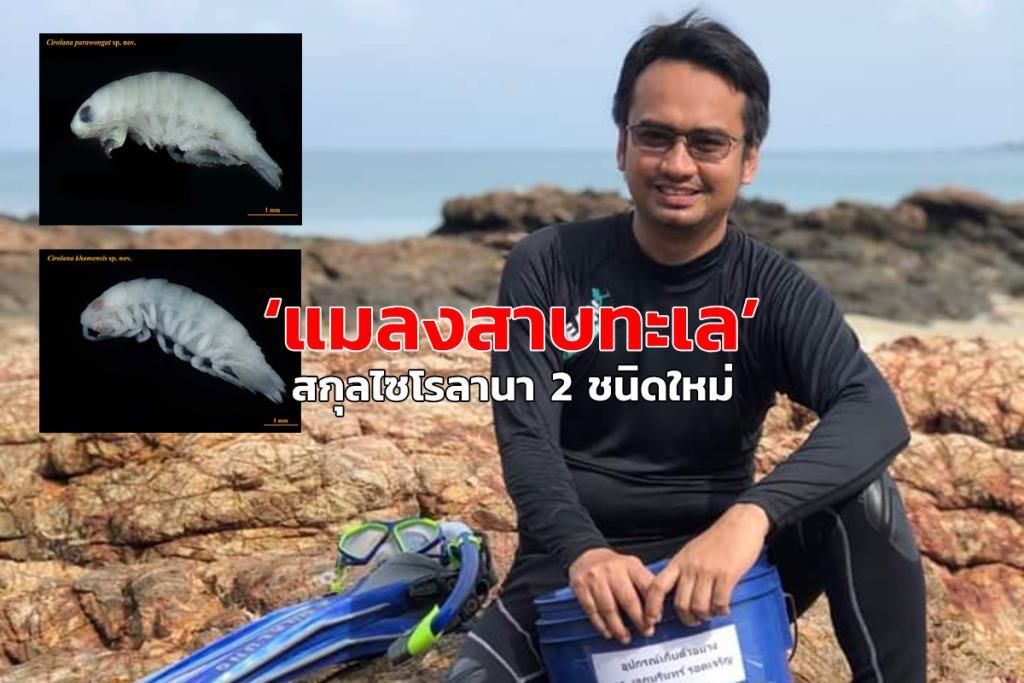 """นักวิจัย ม.สงขลานครินทร์ ค้นพบ """"แมลงสาบทะเล"""" สกุลไซโรลานา 2 ชนิดใหม่ในอ่าวไทย"""