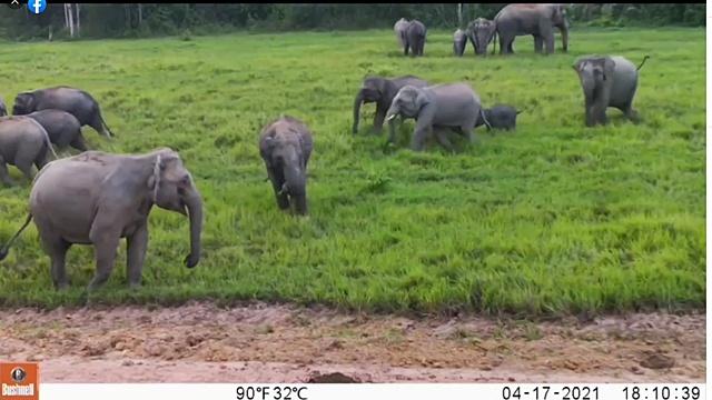 ขสป.เขาอ่างฤๅไน ปลื้ม! โชว์ภาพส่องสัตว์ป่าหลายชนิดในพื้นที่ปรับปรุง
