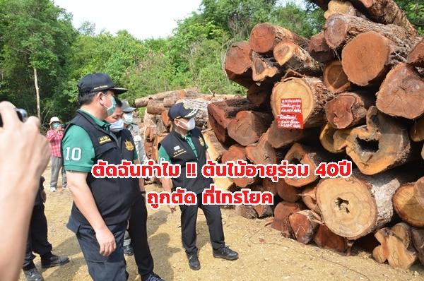 เสียดาย!! ต้นไม้ อายุร่วม 40 ปี ถูกตัดเป็นทอนกว่า 400 ท่อน  อ. ที่ไทรโยค