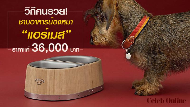 """วิถีคนรวย! ชามอาหารสำหรับน้องหมาของ """"แอร์เมส"""" ราคาแค่ 36,000 บาท"""
