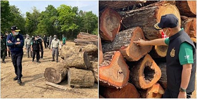 """""""วราวุร"""" ลงพื้นที่บ้านพุองกะ ตรวจไม้ของกลาง ย้ำอีกพื้นที่ป่าทับซ้อน มติ ครม.ห้ามตัด"""