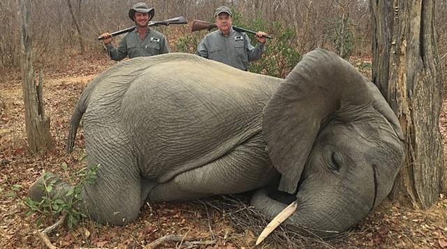 สุดช็อก! โควิดเป็นเหตุ 'ซิมบับเว'ขายใบอนุญาตล่าช้างที่ใกล้สูญพันธุ์ แค่ตัวละ 10,000 ดอลลาร์