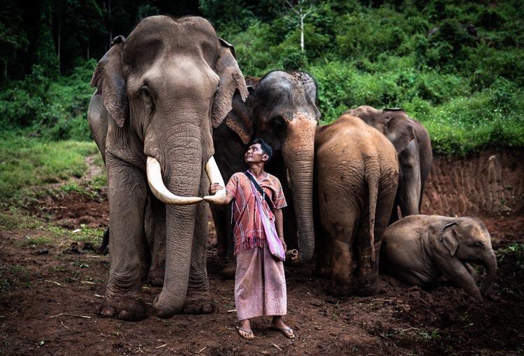 """""""เครือซีพี"""" จับมือสมาคมสหพันธ์ช้างไทย คิกออฟโครงการ """"คนไทยรักช้าง"""" ระดมสรรพกำลังบ.ในเครือ ร่วมด้วยช่วยช้างและควาญช้าง ก้าวผ่านวิกฤตโควิด-19"""