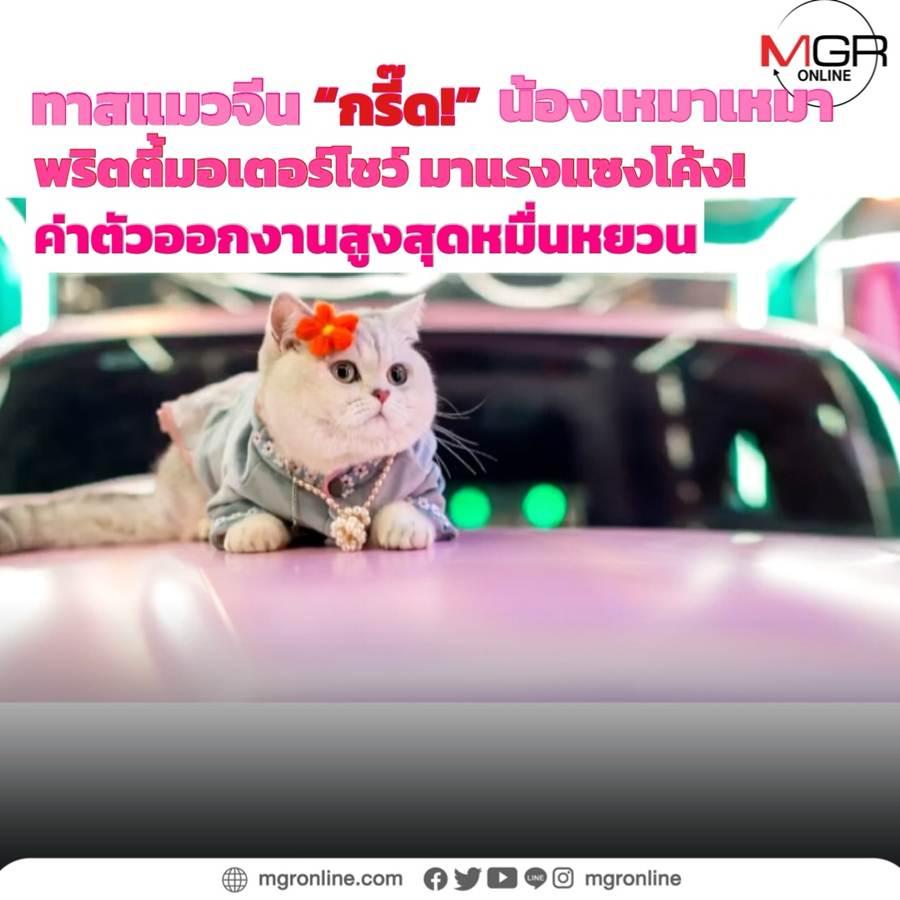 """ทาสแมวจีน """"กรี๊ด!"""" 'เหมาเหมา' พริตตี้มอเตอร์โชว์มืออาชีพ ค่าตัวออกงานสูงสุดหมื่นกว่าหยวน!"""