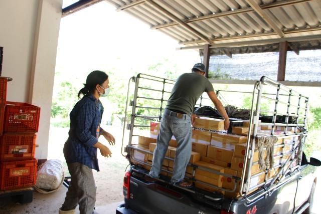 ต้นฤดูเจอโควิดระบาด แต่โซเชียลฯช่วยรอด คนแห่ซื้อเชอรี่ดอยแม่สลองจนแพคส่งแทบไม่ทัน