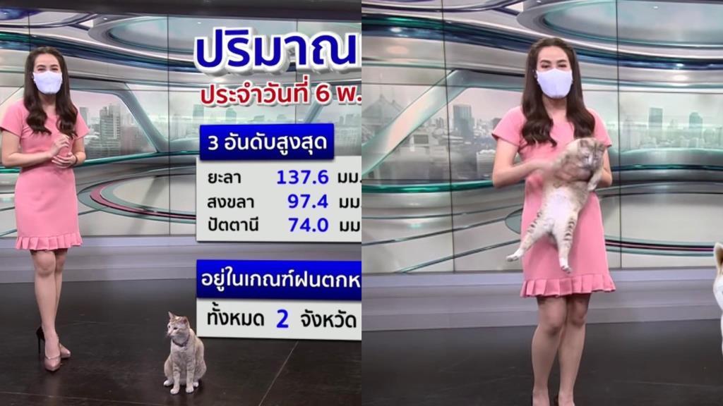 โซเชียลฯ แห่แซวนึกว่า CG หลังพบคือแมวจริง บุกรายการพยากรณ์อากาศขโมยซีนผู้ประกาศสาว (ชมคลิป)