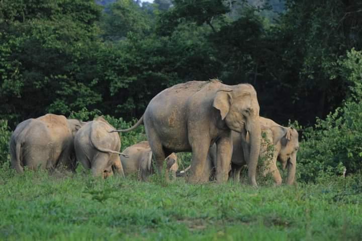 ช้างป่าที่อุทยานแห่งชาติกุยบุรี (ภาพ : เพจอุทยานแห่งชาติกุยุรี)