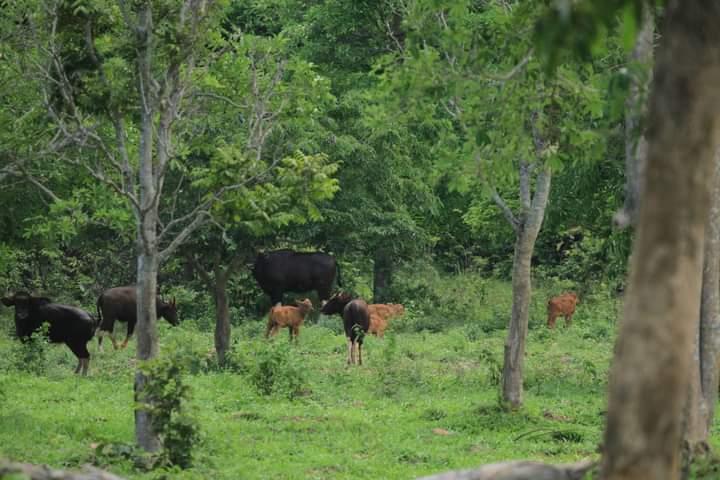 ช้างป่าที่อุทยานแห่งชาติกุยบุรี (ภาพ : เพจอุทยานแห่งชาติกุยบุรี)