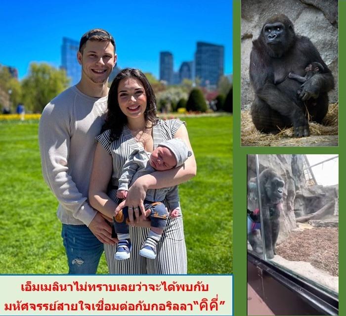 (ภาพซ้าย) ไมเคิล ออสติน และเอ็มเมลินาศรีภรรยา กับน้องแคนเนียน ลูกชายวัน 5 เดือน ถ่ายภาพเป็นที่ระลึกก่อนเดินเข้าชมสวนสัตว์แฟรงคลิน ปาร์ก ซู ในเมืองบอสตัน โดยไม่คาดคิดว่าจะได้รับประสบการณ์มหัศจรรย์ คือ คุณแม่ลิงกอริลลามาปลาบปลื้มหลงใหลน้องแคนเนียน และมอบความไว้วางใจให้เอ็มเมลินาขั้นสุด โดยเดินมานั่งเล่นแนบชิดกันแบบที่มีเพียงกำแพงกระจกใสกั้นกลางไว้ไม่กี่เซนติเมตร เหตุการณ์น่าประทับใจเกิดขึ้นเมื่อสุดสัปดาห์แรกของเดือนพฤษภาคม 2021 (ภาพขวา-บน) คุณแม่คิคี่ เมื่อ 11 ปีที่แล้ว เธอเป็นข่าวบนนิตยสาร เพราะแฟนคลับของสวนสัตว์เฝ้ารอให้เธอตั้งครรภ์ที่ 3 (ภาพขวา-ล่าง) คิทอมโบ คุณพ่อกอริลลา คู่ชีวิตของคิคี่