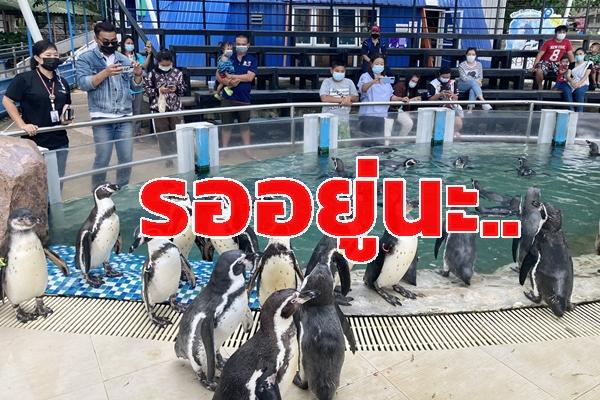 ยังเปิดปกตินะ!! สวนสัตว์เปิดเขาเขียว วางมาตรการเข้มป้องกันโควิด-19 สวมแมสก์  เว้นระยะห่าง