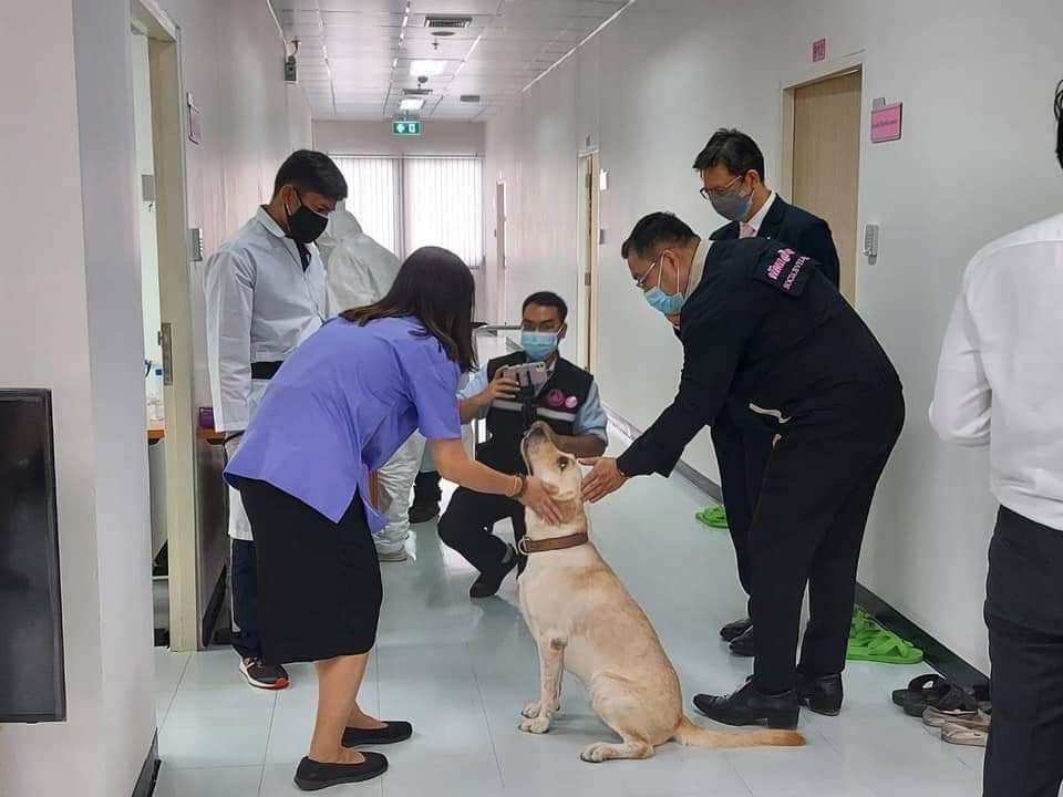 พม.ร่วมมือคณะสัตวแพทย์จุฬาฯ ตรวจโควิดโดยใช้สุนัขดมกลิ่น ตั้งเป้าสร้างอาสาทุกเขต