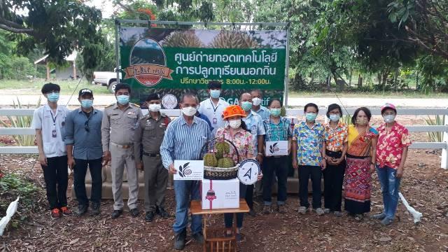"""ขายกันกระหึ่ม!ทุเรียน""""หลง-หลินลับแล""""บ้านรักไทย-พิษณุโลก ไปรษณีย์ไทยส่ง 6 ล้อรับถึงสวน"""