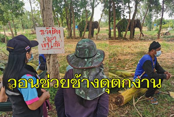 """วอนช่วย! """"ช้างพังเชอรี่""""ทำร้ายนทท.ตายที่เขาใหญ่ ล่าสุดเหงาซึมขาดแคลนอาหาร หลังถูกเลิกจ้างไร้งานไร้เงิน"""