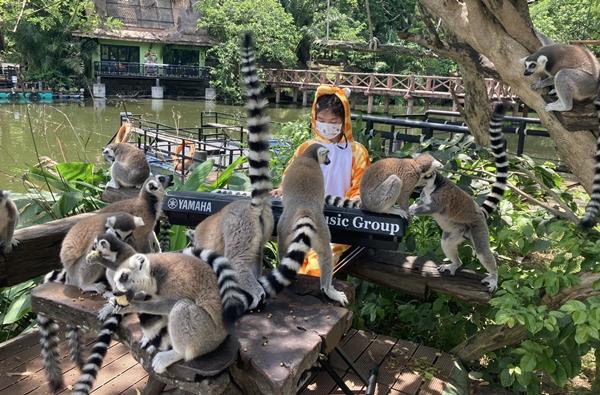 สวนสัตว์เปิดเขาเขียว จัดดนตรีคลายเหงาให้สัตว์ฟังช่วงโควิด ทำนักท่องเที่ยวหาย