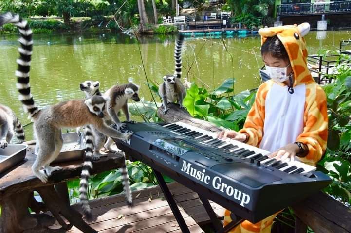 """ไอเดียเจ๋ง! """"สวนสัตว์เปิดเขาเขียว"""" เล่นดนตรีให้สัตว์ฟังคลายเหงา"""