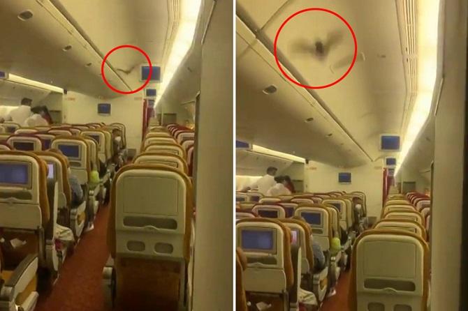 ยิ่งกลัวโควิดอยู่!แตกตื่นค้างคาวบินว่อนห้องโดยสารเที่ยวบินจากอินเดียสู่สหรัฐฯ ต้องลงจอดฉุกเฉิน(ชมคลิป)