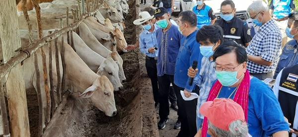 ประภัตร ไฟเขียวเจ้าของฟาร์มซื้อวัคซีน หลังพบประจวบฯวัวป่วยด้วยโรคลัมปี สกิน แล้ว กว่า800 ตัว ตายอีก10 ตัว