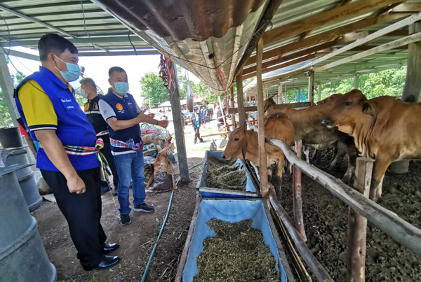บุรีรัมย์เร่งควบคุมป้องกันโรคลัมปี สกิน หลังพบวัวติดเชื้อกว่า 2,360 ตายแล้ว 64 ตัว