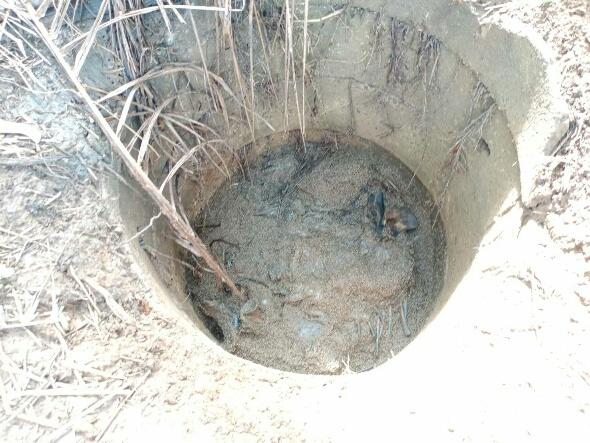 สลด! ลูกช้างป่าวัย 3 เดือนพลัดตกบ่อน้ำในสวนปาล์มชาวบ้านหนองใหญ่  จ.ชลบุรี