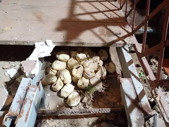 ผงะ!พบงูเหลือมยักษ์ลอกคราบยาวเฟื้อย-ทิ้งไข่ฟักเป็นตัวแล้วถึง 45 ฟอง