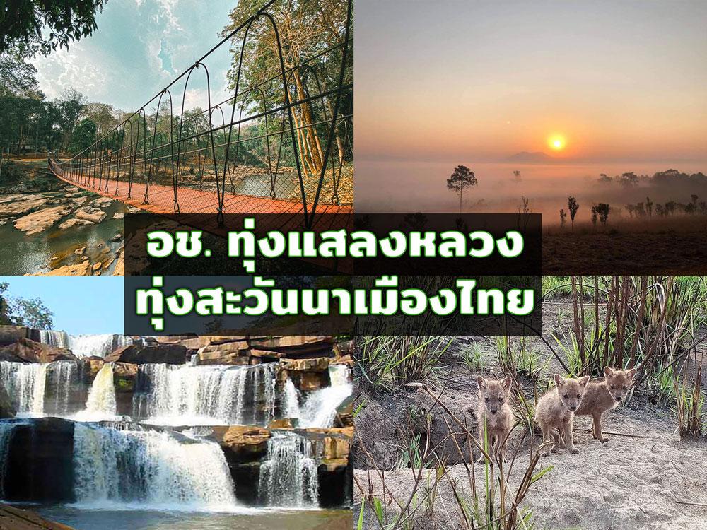 """ชมสะพานสลิง-ส่องสัตว์ป่าอวดโฉมในวันที่ปิดทำการ ที่ """"อช.ทุ่งแสลงหลวง"""" ทุ่งสะวันนาเมืองไทย"""