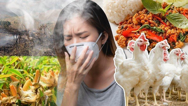 ปัญหาฝุ่นพิษ PM 2.5 จากอุตสาหกรรมการผลิตไก่