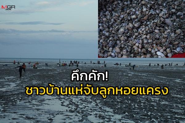 คึกคัก! ชาวบ้านแห่ตักลูกหอยแครงสร้างรายได้วันละนับหมื่นบาท/ต่อคน