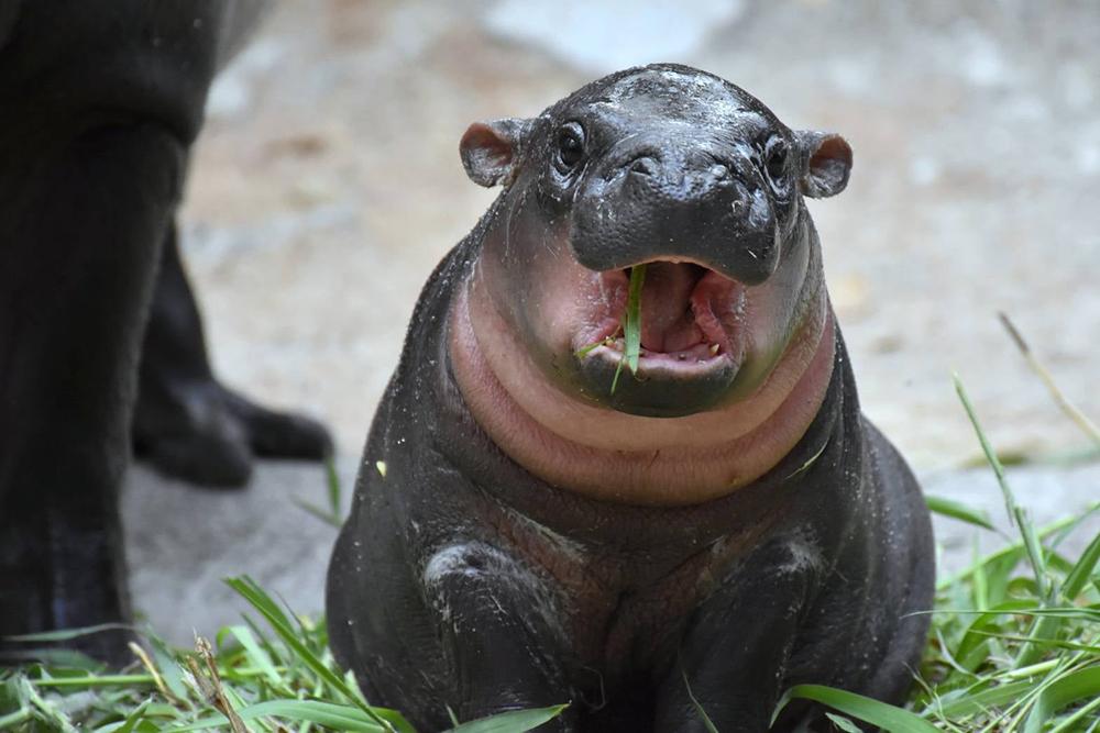 ภาพ เพจ : สวนสัตว์เปิดเขาเขียว Khao Kheow Open Zoo