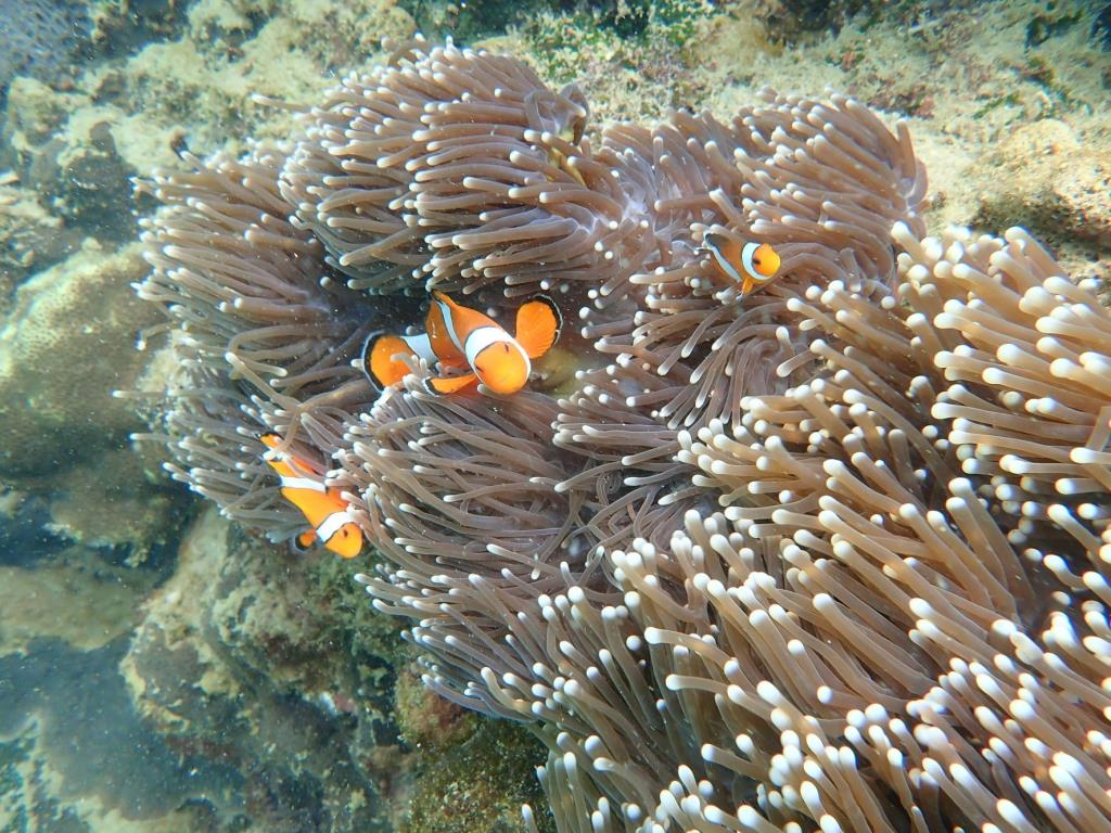 โลกใต้ทะเลแสนสวยงาม (ภาพจากสำนักอุทยานแห่งชาติ)