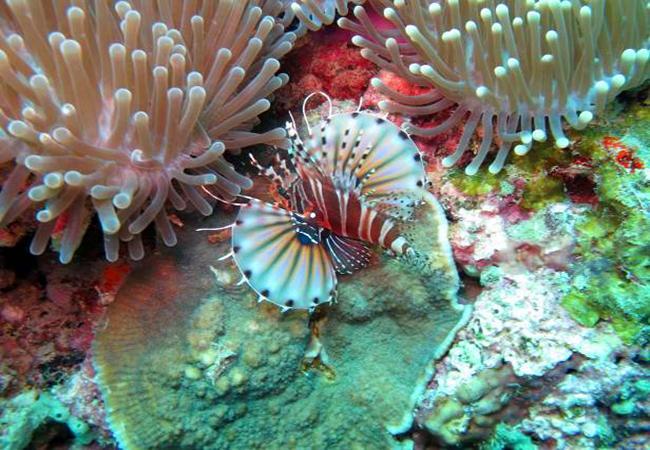 จุดชมปะการังที่เกาะกะทะ (ภาพจากสำนักอุทยานแห่งชาติ)