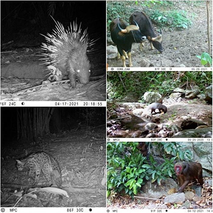 สัตว์ป่าหายาก โผล่หน้ากล้องดักถ่าย ขสป.แม่น้ำภาชี! สะท้อนผลลาดตระเวณเชิงคุณภาพ และนโยบาย ทส.ยกกำลัง 2+4