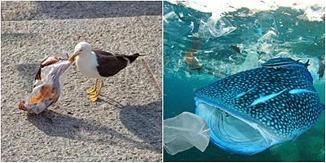 นกและปลากินพลาสติก เครดิตภาพ: Shutter Stock