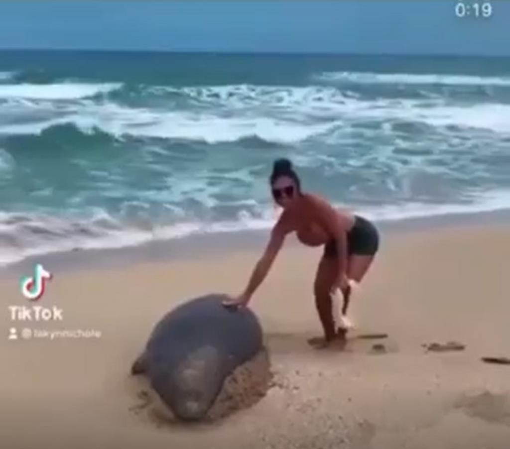 เสียค่าปรับเป็นล้าน! สาวแอบแตะแมวน้ำที่หาดในฮาวาย