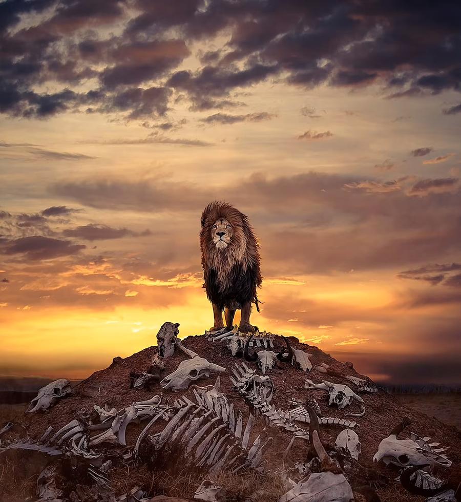 """ช่างภาพชาวอังกฤษกับภาพ """"สิงโต"""" ตัวจริง ไม่ใช่ภาพจากหนัง The Lion King"""