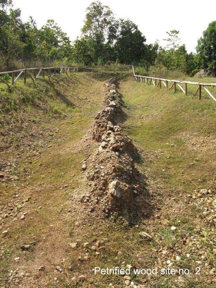 ไม้กลายเป็นหินหลุม 2 (ภาพ : (แฟ้มภาพ) วนอุทยานไม้กลายเป็นหิน จังหวัดตาก)