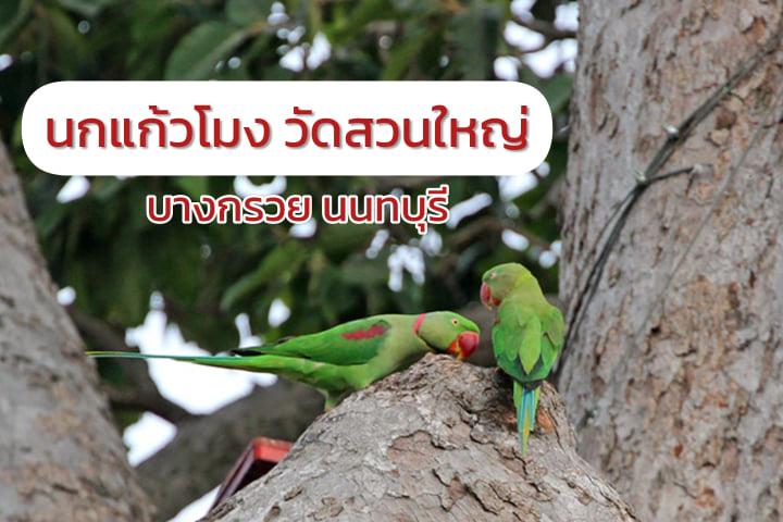 นกแก้วโมงแห่งวัดสวนใหญ่ บางกรวย นนทบุรี