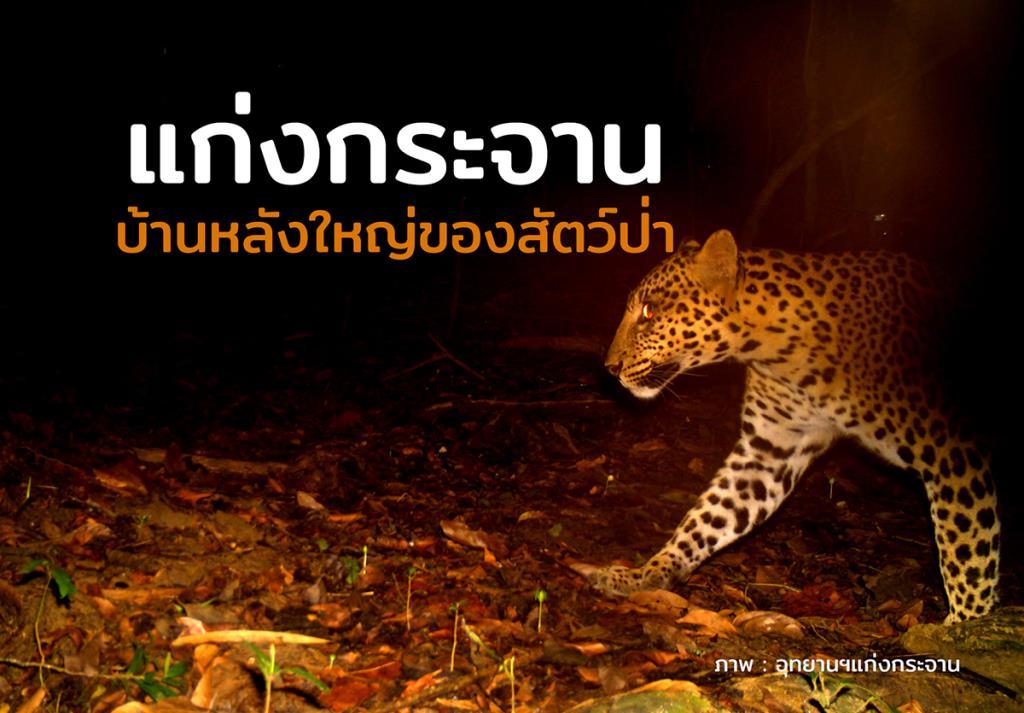 """""""บ้านหลังใหญ่ของสัตว์ป่า"""" ปัจจัยสำคัญทำให้ """"กลุ่มป่าแก่งกระจาน"""" ได้เป็นมรดกโลก"""
