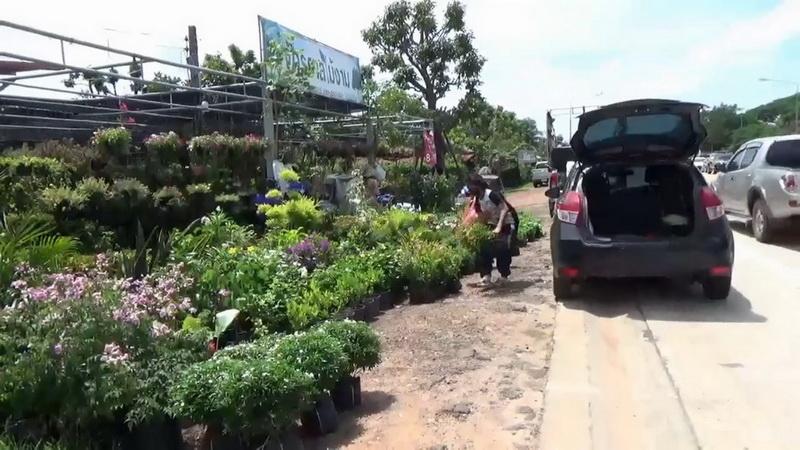 ห่าโควิดระบาดหนัก! หนุนร้านขายพืชสมุนไพร-ไม้ฟอกอากาศขายดี