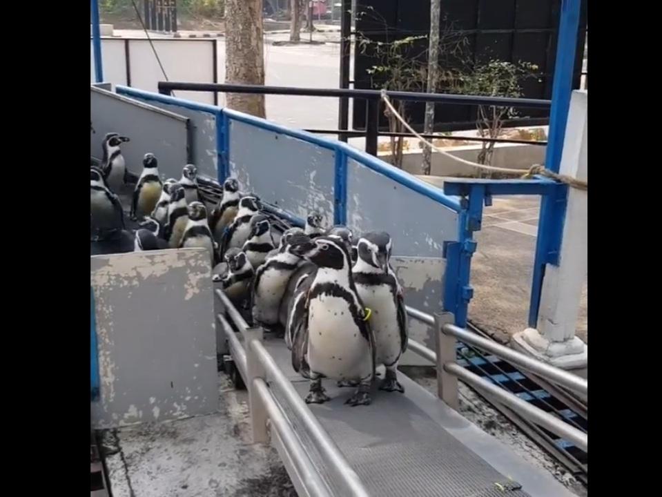 ฝูงนกเพนกวินกว่า 40 ตัว เดินออกมารับแสงแดด