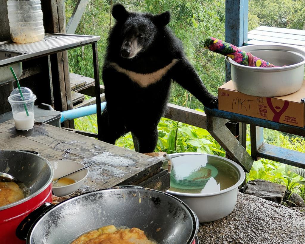 """""""ไข่เจียวหมีผาตรอมใจ"""" กระแสแรง ดันคนเที่ยวเขาใหญ่ล้นทะลัก"""