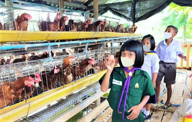 โครงการเลี้ยงไก่ไข่ รร. บ้านคลองเรือ กำแพงเพชร สร้างประสบการณ์ชีวิต หนุนนักเรียนพึ่งพาตนเองในอนาคต